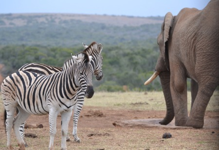 South Africa Private Tours